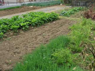 vegetable kitchen garden1.jpg